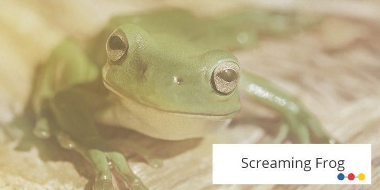 Frontaler Blick auf großen grünen Frosch